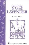 Growing & Using Lavender