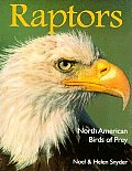 Raptors North American Birds Of Prey