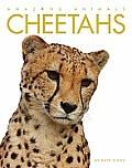 Cheetahs Amazing Animals