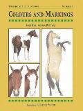 Colours & Markings Horses