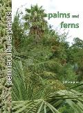 Permaculture Plants: Palms and Ferns