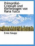 Primordial-Cranium Und Kieferbogen Von Rana Fusca
