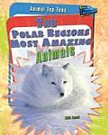 The Polar Region's Most Amazing Animals