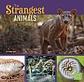 The Strangest Animals in the World