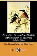 Citizen Bird: Scenes from Bird-Life in Plain English for Beginners (Illustrated Edition) (Dodo Press)