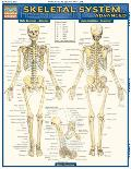 Skeletal System Advanced Laminated Reference