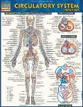 Circulatory System Advanced Laminated Reference