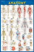 Anatomy Laminated Poster