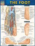 Foot Laminated Reference