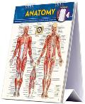 Anatomy Quick Sudy Easel