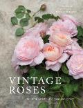 Vintage Roses Beautiful Varieties for Home & Garden