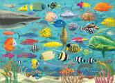 All the Fish 1000 Piece Jigsaw Puzzle