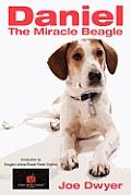 Daniel the Miracle Beagle