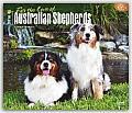 For the Love of Australian Shepherds 2016 Calendar