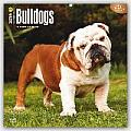 Bulldogs 2016 Calendar