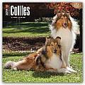 Collies 2016 Calendar