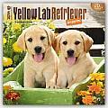 Yellow Lab Retriever Puppies 2016 Calendar