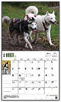 For the Love of Siberian Huskies 2016 Calendar
