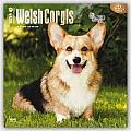 Welsh Corgis 2016 Calendar
