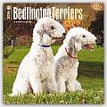 Bedlington Terriers 2016 Calendar