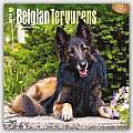 Belgian Tervurens 2016 Calendar