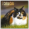 Calico Cats 2016 Calendar