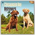 Chesapeake Bay Retrievers 2016 Calendar