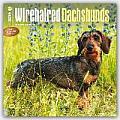Wirehaired Dachshunds 2016 Calendar