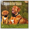 Dogue de Bordeaux 2016 Calendar