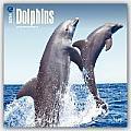 Dolphins 2016 Calendar