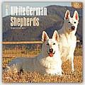 White German Shepherds 2016 Calendar