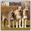 Irish Wolfhounds 2016 Calendar