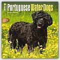 Portuguese Water Dogs 2016 Calendar