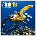 Sea Turtles 2016 Calendar