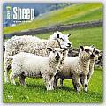 Sheep 2016 Calendar
