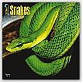 Snakes 2016 Calendar