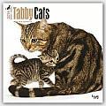 Tabby Cats 2016 Calendar