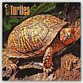 Turtles 2016 Calendar