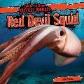 Red Devil Squid