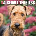 Just Airedale Terriers 2021 Wall Calendar (Dog Breed Calendar)