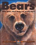 Bears Polar Bears Black Bears & Grizzly