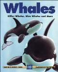 Whales Killer Whales Blue Whales & More