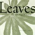Leaves In Myth Magic & Medicine In My