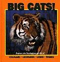 Big Cats Explore The Fascinating World