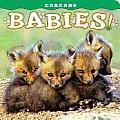 Cascade: Babies!