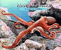 About Mollusks A Guide For Children
