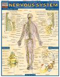 Nervous System Laminated Reference
