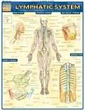 Lymphatic System Laminated Reference Charts