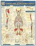 Muscular Origins & Insertions Laminated Reference Chart