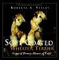 Soft Coated Wheaten Terrier Coat of Honey Heart of Gold